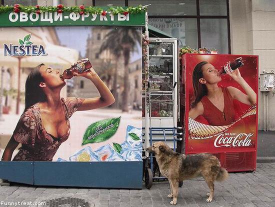 Anjing ini lagi bingung, pingin minum cola apa susu...